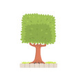 green tree with a square crown vector image