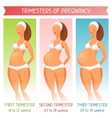 Trimesters of pregnancy for websites vector image