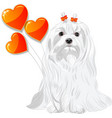 Valentine card with dog Maltese and hearts vector image