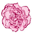 clove flower with rose petals and pink edging vector image