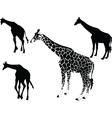 giraffe collection - vector image
