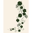 Grape vine silhouette vector image