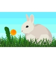 Rabbit on the grass flower seamless animal and vector image