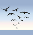 bird flock flying over blue sky background animal vector image