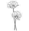 decorative poppy vector image