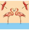 Flamingos in flight and water vector image