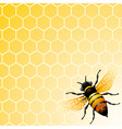 Bee on honeycomb vector image