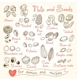 Set drawings of nuts and seeds for design menus vector image