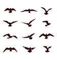 bird flying silhouette set wildlife icon vector image