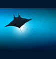 big manta ray in ocean water underwater life vector image