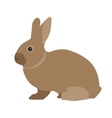 Pet Rabbit vector image
