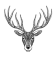 Hand drawn head deer reindeer Ethnic patterns vector image
