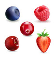 strawberry raspberry blueberries cherry currant vector image