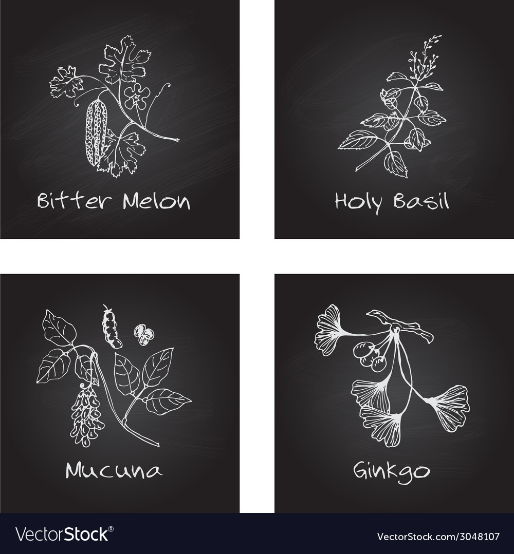 Handdrawn set  ayurvedic herbs vector