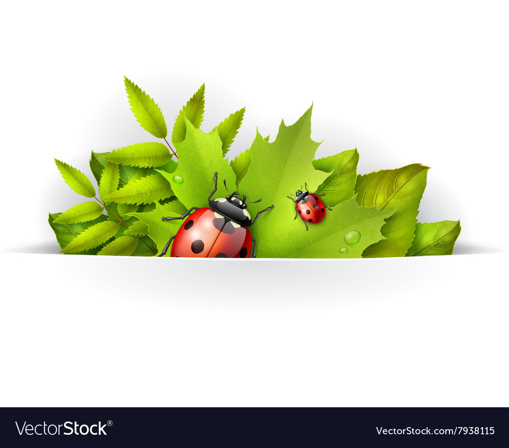 Banner spring background vector