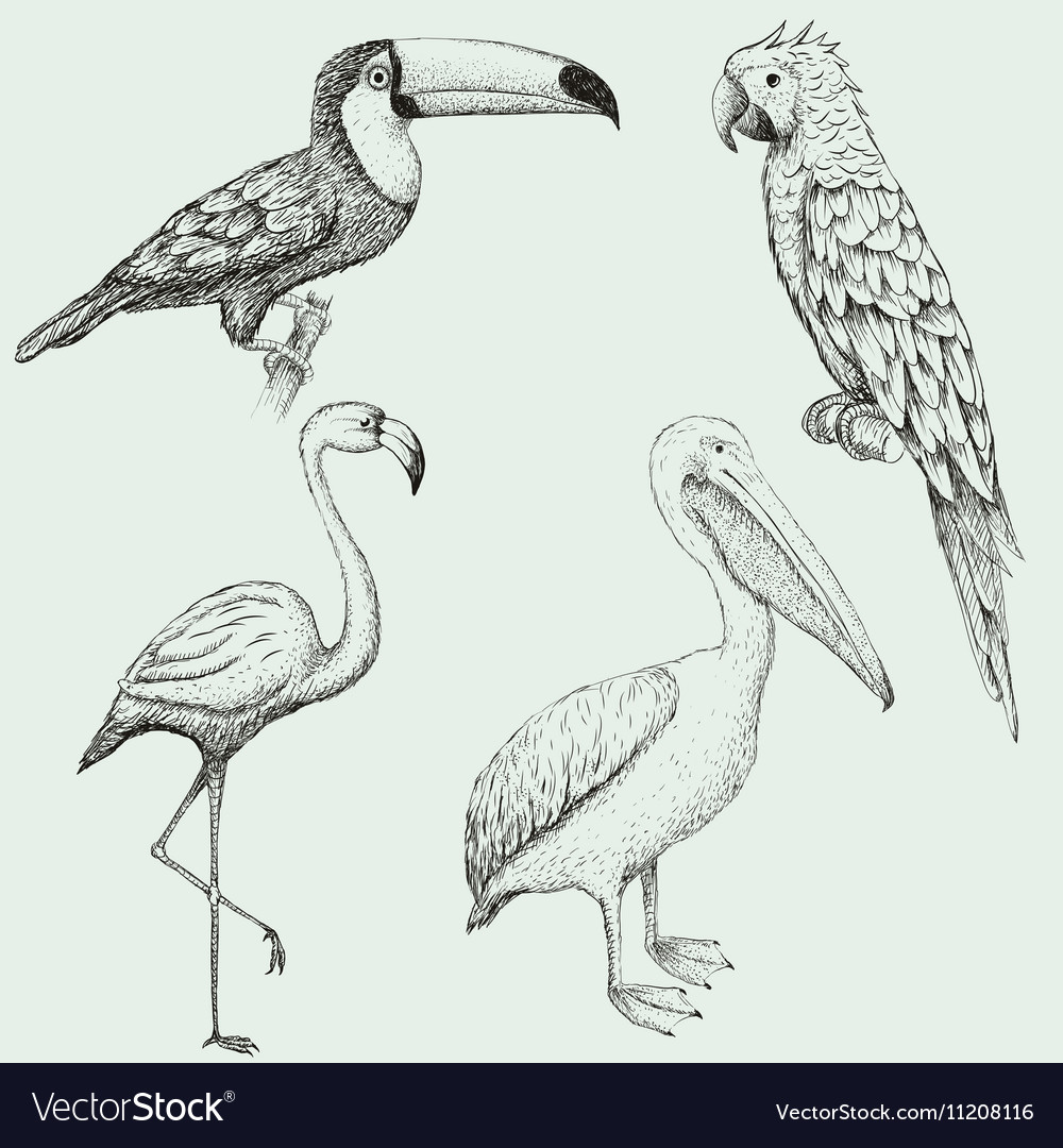 Collection of exotic tropical birds vector