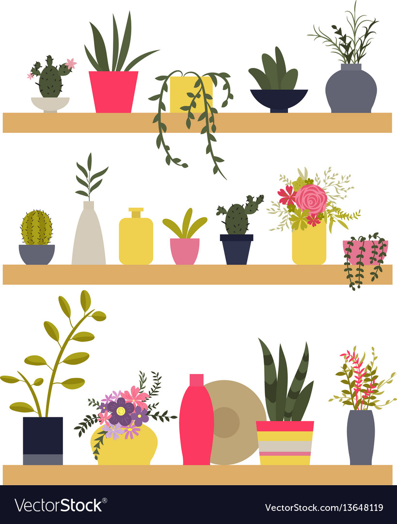 Shelves with plants and vases of flowers vector