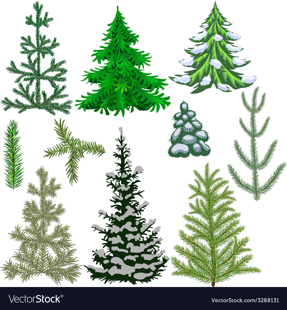 Set of fir trees and fir branches for christmas vector