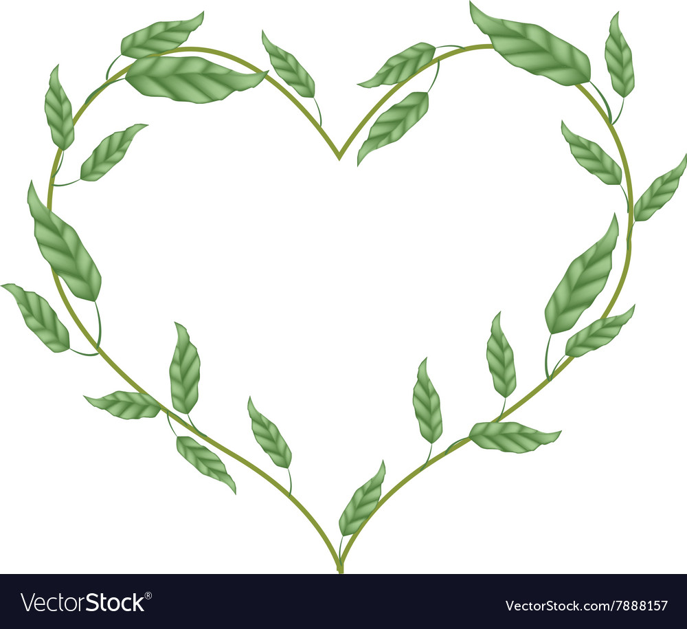 Branch of green vine leaves in heart shape vector