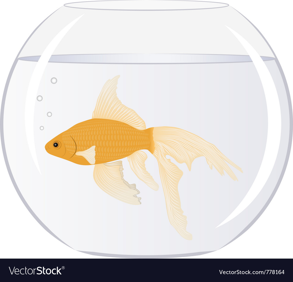 Goldfish in the bowl with bubbles vector
