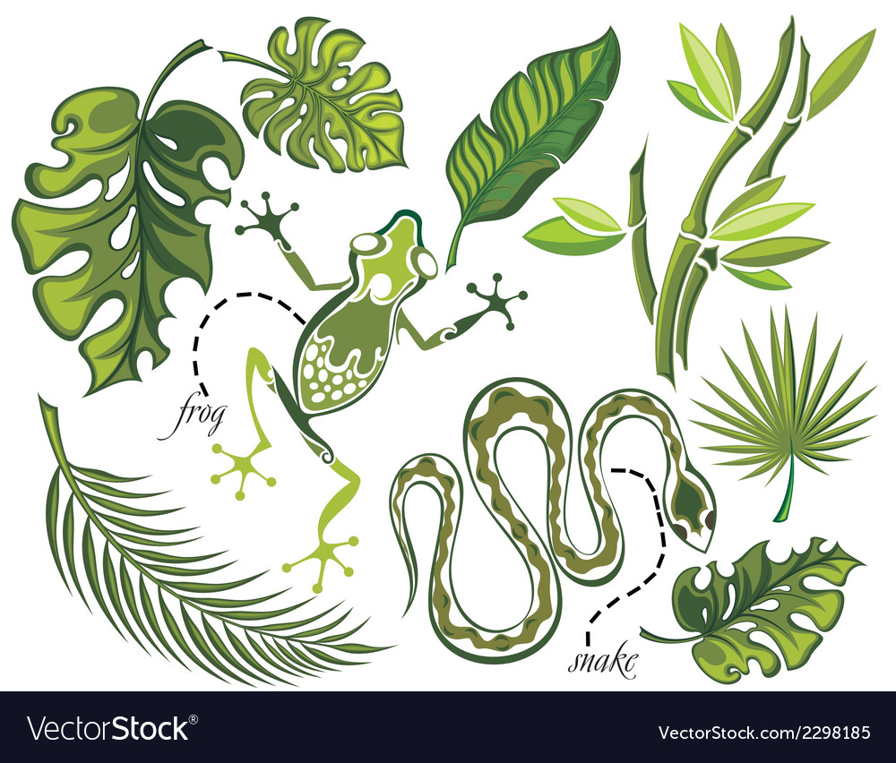 Set of tropical leaves and reptiles vector