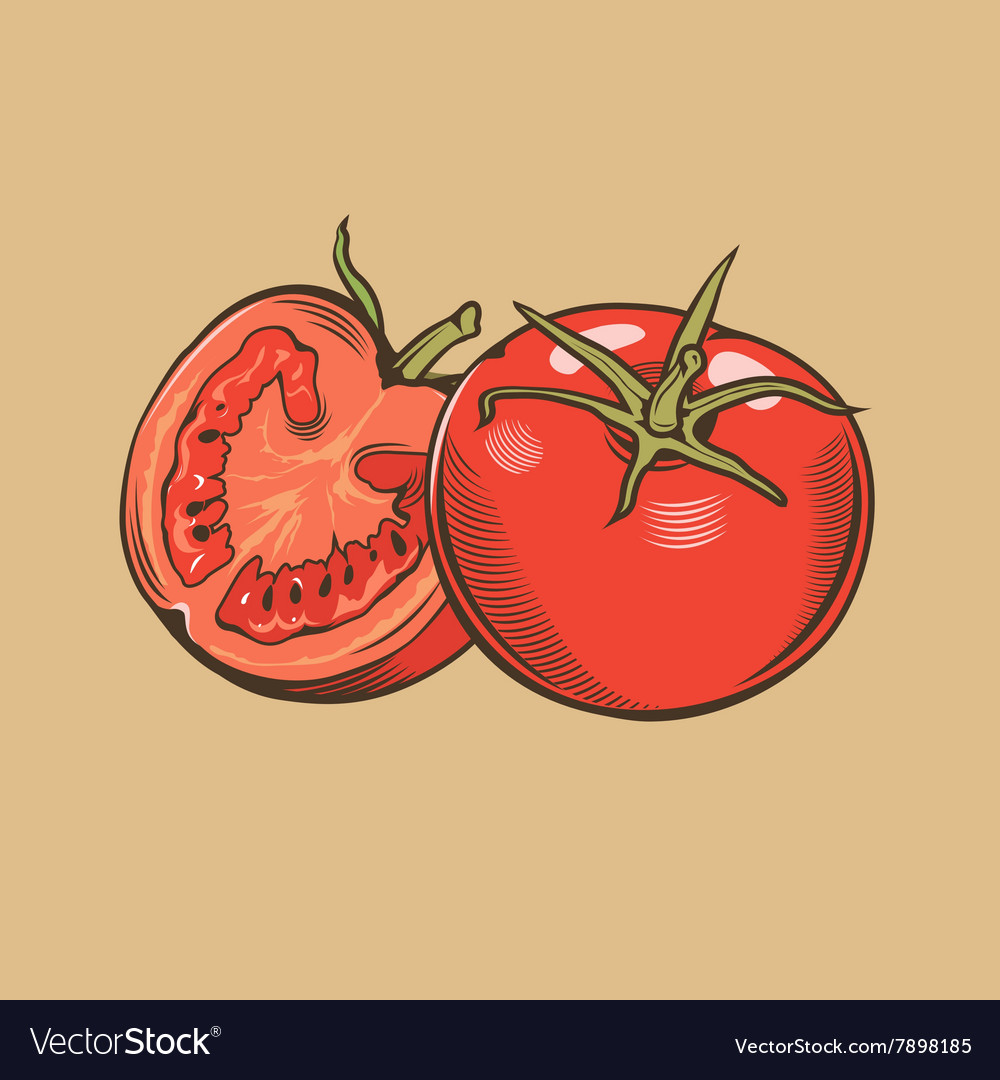 Tomatoes in vintage style colored vector