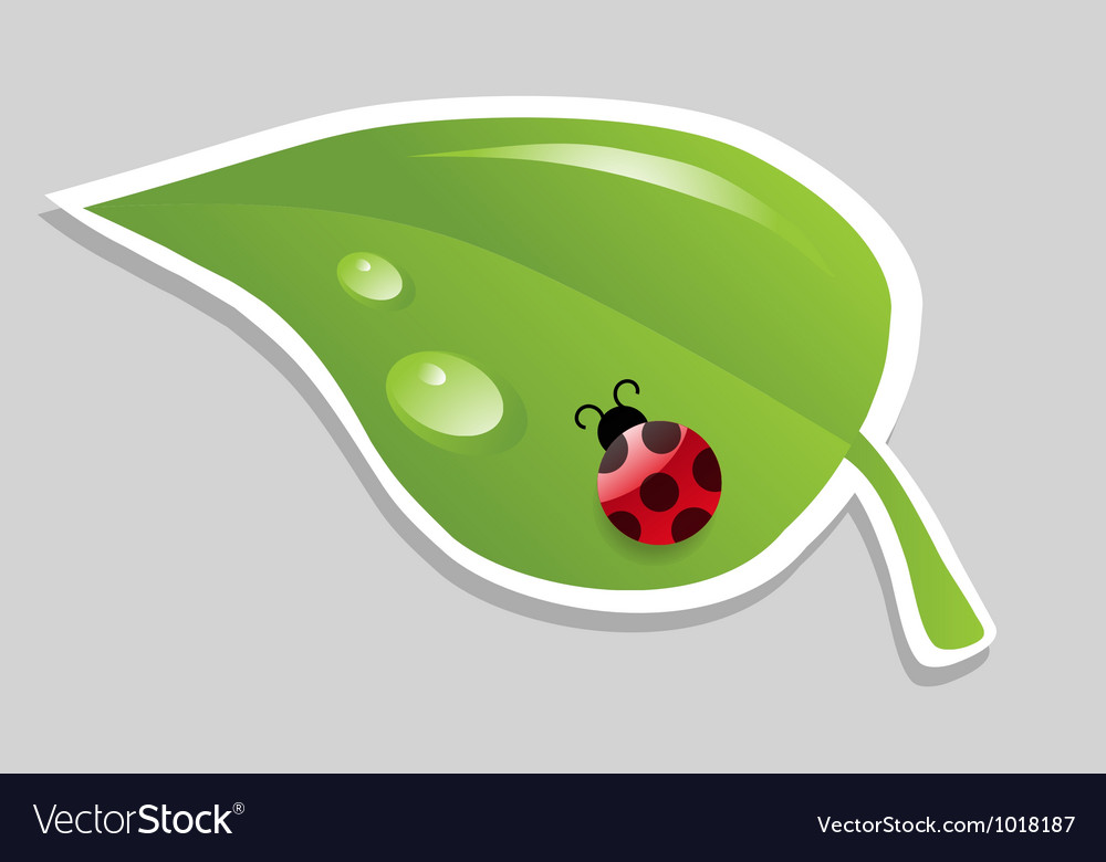 Leaf with ladybird vector