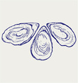 Fresh opened oyster vector image
