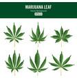 marijuana green leaf medicinal herbs vector image
