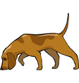 bloodhound dog vector image