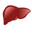 liver anatomy colorful drawing white background vector image
