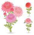 collection of beautiful chrysanthemums for your vector image vector image