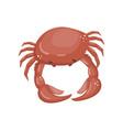 crab fresh seafood shellfish cartoon vector image