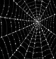 Web in drops of dew vector image