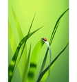 vector grass vector image vector image
