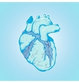 heart of ice human blue with Veins and Ventricles vector image vector image