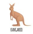 cute kangaroo in flat style vector image