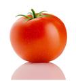 red truss tomato vector image