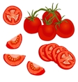colorful of tomato vector image