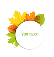 Autumn design of leaves vector image