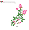 Rose Flowers The Popular Flower of Maldives vector image