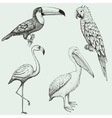 Collection of exotic tropical birds vector image vector image