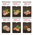 Nuts grain and kernels poster with titles vector image