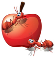 An apple with ants vector image