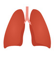 lung anatomy colorful drawing on white background vector image
