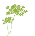 plant green silhouette vector image