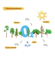 Image of photosynthesis vector image