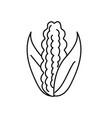line delicious and healthy cob corn food vector image
