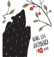 Wild Black Bear Loves Raspberry vector image