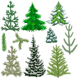 Set of fir trees and fir branches for Christmas vector image